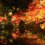京都で人気の高台寺の紅葉の見ごろイベントアクセス方法