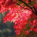 熊本県内の紅葉|名所・イベント・見ごろ情報