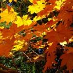 神奈川県内の紅葉|名所・イベント・見ごろ情報