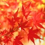 兵庫県内の紅葉|名所・イベント・見ごろ情報