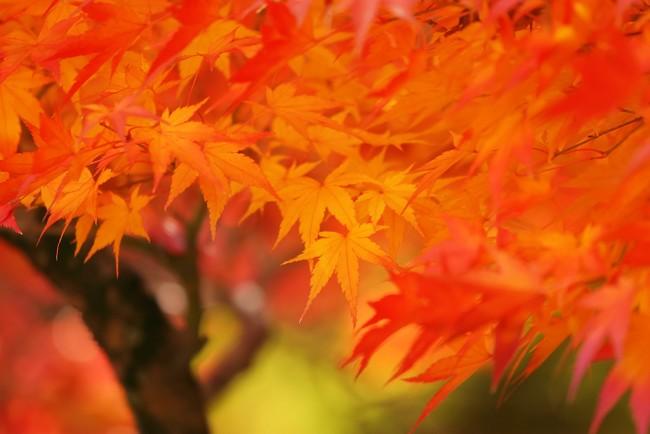 autumn-leaves_00025