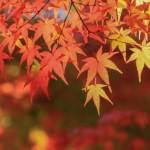 奈良で人気の吉野山の紅葉の見ごろ、イベント、アクセス方法