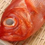 12月が旬のおいしい魚の産地と料理