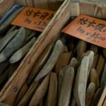 鰹節の保存方法と種類やランク、本枯節の上手な削り方!