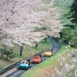 鹿児島丸岡公園の桜|お花見開花予想/見ごろ/イベント/アクセス