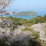 鹿児島魚見岳の桜|お花見開花予想/見ごろ/イベント/アクセス