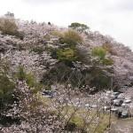 宮崎県垂水公園の桜祭り|桜お花見開花予想/見ごろ/アクセス