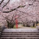 佐賀県小城公園の桜|お花見開花予想/見ごろ/イベント/アクセス