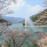 熊本市房ダム湖周辺の桜|お花見開花予想/見ごろ/イベント/アクセス