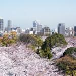 福岡県舞鶴公園の桜|お花見開花予想/見ごろ/イベント/アクセス