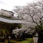大分県臼杵城址の桜|お花見開花予想/見ごろ/イベント/アクセス