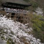 京都清水寺の桜|お花見開花予想/見ごろ/夜桜/アクセス